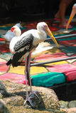 The white egret. On colourful floor Royalty Free Stock Photos