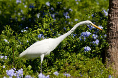 White egret between flowers Stock Images