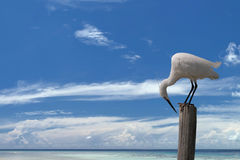 White egret heron on the blue sky background Stock Image