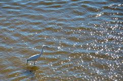 White egret on the shore of the river Stock Photo