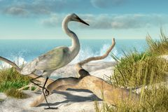 Egret and Driftwood vector illustration