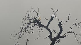 White egret in the tree. Bird in the tree Stock Image