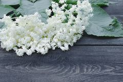 White elderberry flowers and leaves from the garden on a rustic wooden background. There is a place for your text royalty free stock image