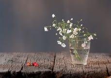 White elegant gypsophila. Stock Photo