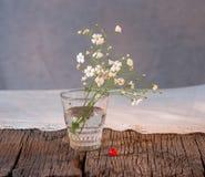 White elegant gypsophila. Stock Photos