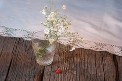 White elegant gypsophila. Royalty Free Stock Images