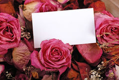 White empty card with dried roses Royalty Free Stock Photo