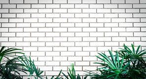 White empty frame of white brick wall decorate with green leaves at the bottom of frame. Exterior or interior vintage house white royalty free stock images