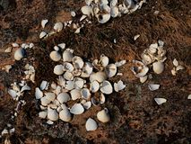White empty seas hells in moss. Empty shells, the rest after a sea birds feed. Sea bbeach Stock Image