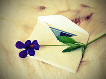 White envelope and pansy flower Stock Photo