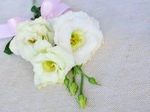 White Eustoma (Lisianthus) flowers Stock Photography