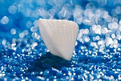 White exitoic sea shell on blue pebble under water. Droplets stock photography