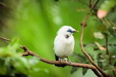 White exotic bird on a branch Royalty Free Stock Photography