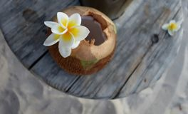 White exotic flower on coconut. White exotic flower on a sweet coconut cocktail - Mauritius Royalty Free Stock Photo