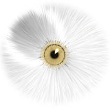 White eye. Close-up of a white eye and gold iris Stock Images