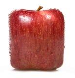 white för äpplebakgrundsfyrkant Royaltyfri Fotografi