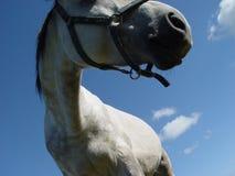 white för 3 häst arkivbilder