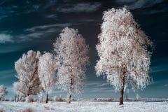 white för bakgrundsbjörktextur Arkivfoto