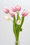 white för bakgrundsbuketttulpan Royaltyfria Bilder