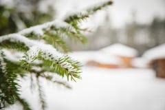 white för bakgrundsjultree Royaltyfri Foto