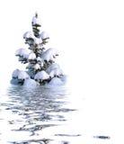 white för bakgrundsjultree Arkivfoto
