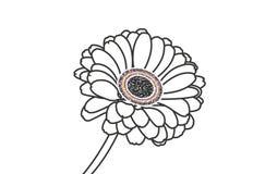 white för blommagerberaisolering Royaltyfri Bild