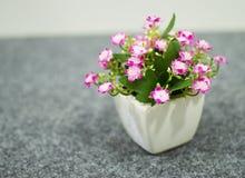 white för blommaisoleringskruka royaltyfri foto
