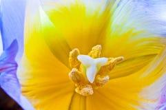 white för blommaisoleringstulpan Fotografering för Bildbyråer