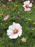 white för blommaskogfjäder Arkivfoto
