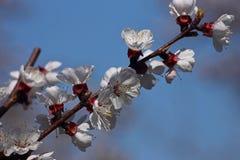 white för blommaskogfjäder Royaltyfria Bilder