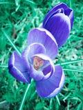 white för blommaskogfjäder Royaltyfri Bild
