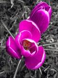 white för blommaskogfjäder arkivfoton