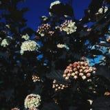 white för blommaskogfjäder Royaltyfri Foto