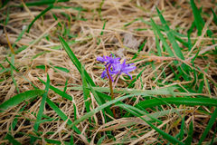 white för blommaskogfjäder fotografering för bildbyråer