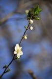 white för blommaskogfjäder Arkivbilder
