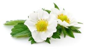 white för blommor två Arkivfoto
