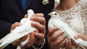 white för duvor två bröllop Royaltyfri Foto