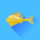 white för fiskguldisolering Royaltyfri Bild