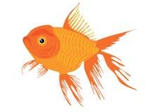 white för fiskguldisolering Arkivbilder