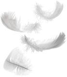 white för fjädrar fyra Royaltyfri Fotografi