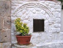 white för främre vägg för euonymus Royaltyfria Bilder
