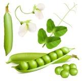 white för fröskida för ärtor för bakgrundskulor grön royaltyfri illustrationer