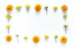 white för fyra ram för bakgrund olik blom- set Arkivbild