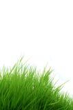 white för gräs för bakgrund 3d isolerad bild Royaltyfria Foton