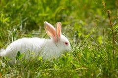 white för gräsgreenkanin royaltyfri fotografi