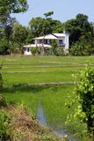 white för grönt hus för fält Royaltyfri Bild