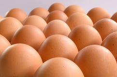 white för grupp för äggäggfokus Arkivfoton