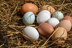 white för grupp för äggäggfokus Royaltyfria Foton