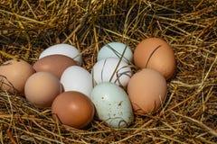 white för grupp för äggäggfokus Royaltyfri Fotografi