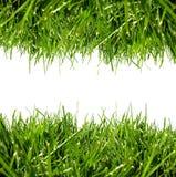 white för kantgräsgreen Fotografering för Bildbyråer